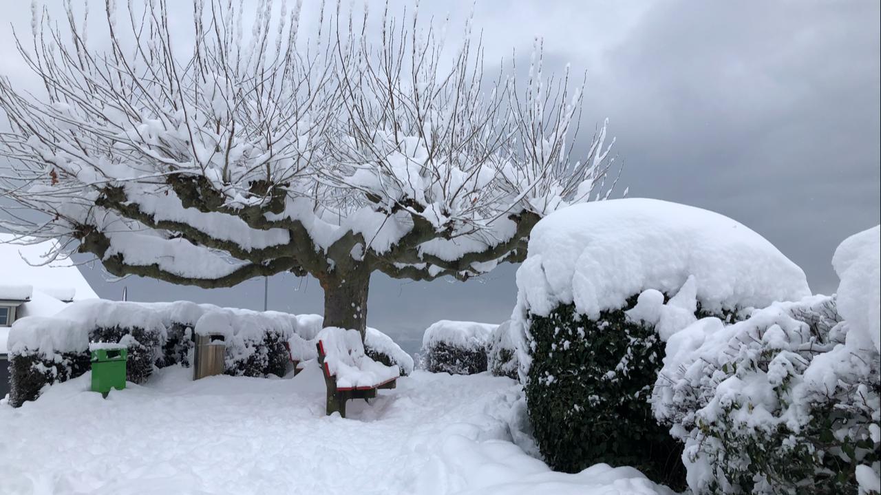 Winter_Stfa_1